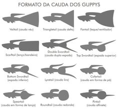 Guppies Types of Tails.