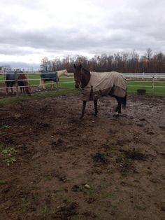 Worst thing is when there out in mud