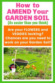 Are your garden grown vegetables and flowers just ho-hum? Chances are you need to improve your garden soil. Learn some practical and easy ways to amend your garden soil. Learn how to grow bigger and better flowers and vegetables by improving and amending your garden soil. Composting in place and Composting made simple. Work On Yourself, Improve Yourself, Garden Maintenance, Garden Pests, Composting, 1950s Fashion, Growing Vegetables, Plant Care, Amazing Flowers