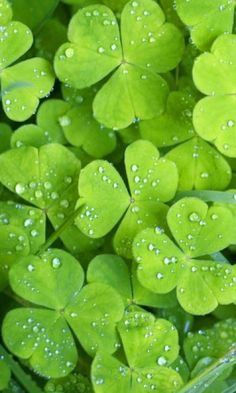 *❤**♡* When I was a child I found several 4 leaf clovers. It was a thrill to know they are out there. You just have to look.