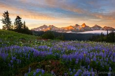 A Grand Sunset, The Smell of Wildflowers & Tatoosh Sunrise by Danny Seidman