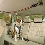 Eleven Tips for a Dog on a Road Trip
