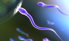 """""""Descubren gen que permite la maduración temprana de los espermatozoides"""". ACN. 24 OCT 2012."""