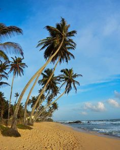 Finally back where I belong at beach It's low season along the south coast of Sri Lanka but that means the beaches can be completely empty! ☀ #beach #sea #palmtree #srilanka #unawatuna #galle #travel #beachlife #tropics #paradise #sand #sunandsea #ocean #beachday #beachtime #tropical #amazingSL #srilankatravel #SL #srilankatoday #srilanka2016 #paradise #travelgram #asia #simplyadventure #holiday #wanderlust #instadaily