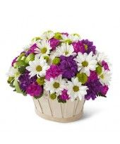Purple And Pink Mixed Daisies Bouquet at Send Flowers. A mixed flower basket bouquet of white daisies, pink carnations, green mums and purple carnations. Purple Carnations, Mini Carnations, Purple Flowers, Send Flowers, Flowers Today, Cheap Flowers, Happy Birthday Flower, Order Flowers Online, Same Day Flower Delivery