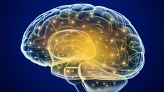 """Memory loss associated with Alzheimers reversed. A definite advance in neuroscience. neuromorphogenesis: """" Memory loss associated with Alzheimer's reversed for first time Since its first description. Stress Disorders, Anxiety Disorder, Mental Disorders, Health And Wellness, Health Tips, White Matter, Brain Health, Mental Health, Gifts"""