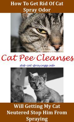 Getting Rid Of Cat Pee Smell