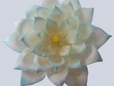 Lotosový kvet - foto postup Sugar Flowers, Succulents, Plants, Cake, Flowers, Projects, Kuchen, Succulent Plants, Plant