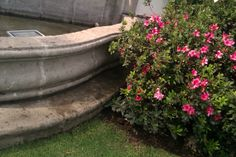 Jardín-Fuente
