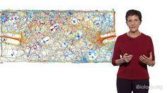 Deborah Gordon (Stanford) 2: The Evolution of Collective Behavior