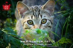 A percentage of the sale from Bow Bow Products and Services will be used for Animal Welfare. Visit www.bowbow.net.in  #BowBow #Facts #AnimalWelfare #AnimalLovers #ProductsForAnimals #PetOwners #Petlove #loveforpets