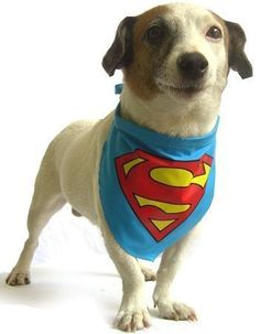 Superman Dog Collar Bandana