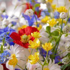 Полевые цветы из полимерной глины #холодныйфарфор #лепка #цветыизглины #цветы #флористика #букет #интерьер #декор #ручнаяработа #handmade #polymerclay #vkpost  #mysolutionforlife #flower #bouquet #floristic