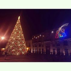Árbol navideño de 30 metros, ubicado en el Jardín Guerrero del Centro Histórico de la ciudad de Santiago de Querétaro, QRO.