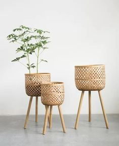 Positioned on solid wood dowel legs, the Studios Round Bamboo Floor Baskets with Wood Legs - Set of 3 gives a nod to mid-century modern design. Bamboo Basket, Plant Basket, Basket Planters, Wicker Baskets, Baskets For Plants, Bamboo Planter, Picnic Baskets, Bamboo Furniture, Furniture Legs