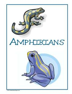 Sample Gallery - Nature Study Pages Kids Things To Do, Nature Study, Amphibians, Scouts, Homeschool, Disney Characters, Fictional Characters, Children, Gallery