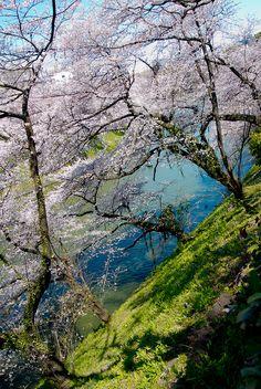 Spring in Tokyo, Japan