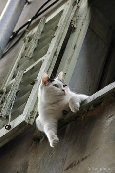"""(Hangin' out in Paris!) * * CAT: """"Me be homophobic. Noes likes ' Gay Paree'."""""""