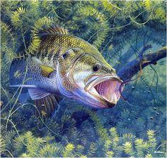 Gone fishing~M Susinno