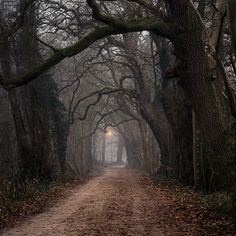 Red Ridinghood's spooky path to grandma's house........