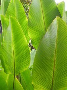 Botanical Gardens on the big island