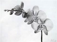 Realistic orchid Drawing - Bing images