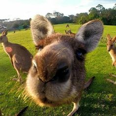 Bournda National Park is a great place to see kangaroos!!