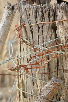 Old barbed wire fence post ~ lots of childhood memories involved pain caused by these.
