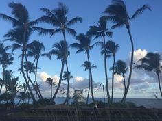 Coconut trees at hookipa maui
