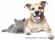 Ten Interesting Differences Between Pet Cats and Dogs  http://ow.ly/9Fmin
