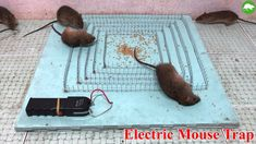 Shock Electric Baton Stun Gun Mouse Trap/DIY to make A Mouse Trap Homemade/Idea Mouse Trap/Easy Saving Mice Mouse Trap Diy, Best Mouse Trap, Mouse Traps, Electric Shock, Perspective Art, Survival Tips, Diy And Crafts, Projects To Try, Bricolage
