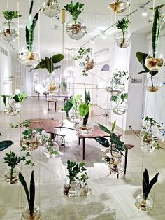 interior, Awesome Suspended Planters Indoor Garden Design Idea With White Wall And Unique Wooden Table Design Ideas With White Door For Interior Design Ideas: Create Natural Atmosphere with Exciting Indoor Garden Interior Design
