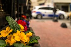 Photograph Police in action by Ana-Cristina Dinu on Police, Action, Table Decorations, Plants, Photography, Home Decor, Group Action, Photograph, Decoration Home