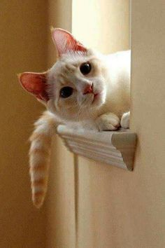 Did I hear the can opener? Did someone say DINNER?