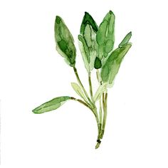 Sage leaves, digital art print of my original watercolor painting,... ($21) ❤ liked on Polyvore featuring home, home decor, fillers, plants, flowers, backgrounds, nature, phrase, quotes and saying