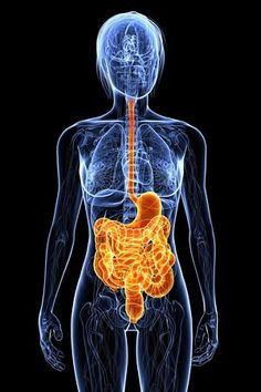 A Surprising Cause of Obesity  A key player in the obesity epidemic may be found in your gut.