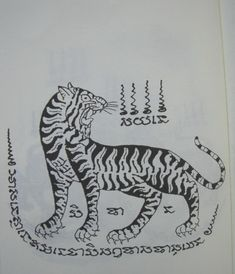 thai tiger - Google Search
