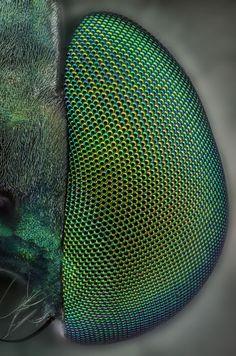 Green eyes. A macro shot of a bug's eye.