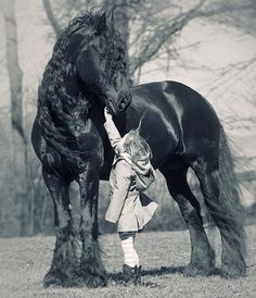 These friesian horses are so kind by heart because they are cold-blooded. I absolutely love them All The Pretty Horses, Beautiful Horses, Animals Beautiful, Beautiful Images, Horse Pictures, Animal Pictures, Animals Tumblr, Animals And Pets, Cute Animals