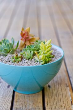 make it perfect: .My love affair with succulents.