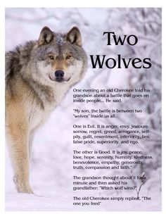 Two wolves I Traditional Cherokee Proverb I by Unknown
