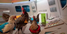 Take look on board the Starship Henteprise in our parody video celebrating the launch of the new Autodoor, featuring chickens in Star Trek jackets. Watch the launch video here! Automatic Chicken Coop Door, Parody Videos, Star Trek, Strawberries, Watch, Board, Jackets, Automatic Doors, Firewood Holder