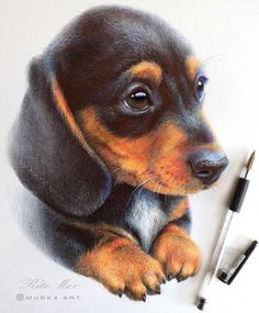 Animal Art with Pencil Ballpoint Pen and Paint. Click the image to see more of Kate Mur's work. Pencil Drawings Of Animals, Animal Sketches, Colorful Drawings, Cute Drawings, Dachshund Facts, Ballpoint Pen Drawing, Color Pencil Art, Cartoon Dog, Watercolor Animals