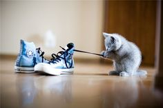 Cats and shoelaces!
