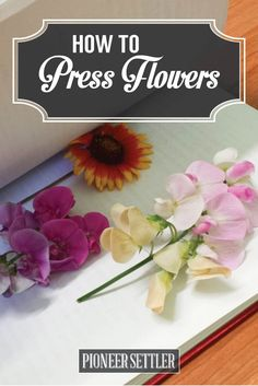 How To Press Flowers For Perfectly Dried Petals Homesteading is part of Pressed flowers diy - Learn how to press flowers by hand with this simple DIY tutorial You'll learn how to find and how to press a variety of flowers, and use them for projects! Nature Crafts, Fun Crafts, Diy And Crafts, Flower Crafts, Diy Flowers, Press Flowers, Drying Flowers, Craft Projects, Projects To Try