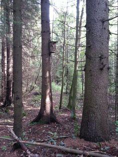 Matkalla lintutornille Trunks, Plants, Drift Wood, Stems, Tree Trunks, Plant, Planting, Planets