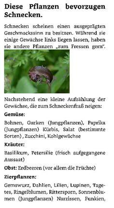 Great Schneckenbek mpfung