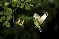 Podemos volar sin tener alas... Ser la letra mi canzion Y tallarme en tu voz.