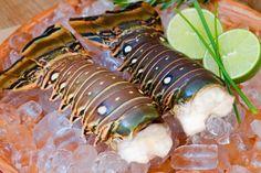 """""""Biggest Ever"""" Lobster Fest Kicks Off in Belize"""