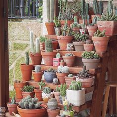 """colección,hoarder...my babys Gracias @fatherofmussels love you ♥️ handy manny keep working for me #gardening #garden #urbangarden #green #cactus…"""